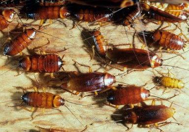 Manejo integral de plagas for Como quitar las hormigas del jardin